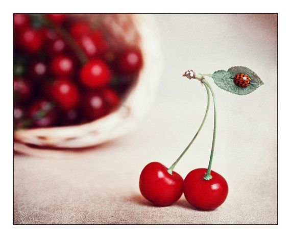 Cherry Kitchen Decor. Still Life Fine Art Photography. Little Ladybug. Food  Photo Sweet