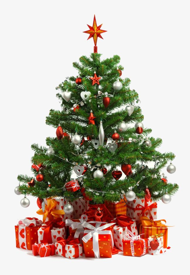 Christmas Tree And Snow Tree Clipart Christmas Tree Beautiful Png Transparent Clipart Image And Psd File For Free Download Christmas Tree With Gifts Christmas Tree Care Christmas Tree Images
