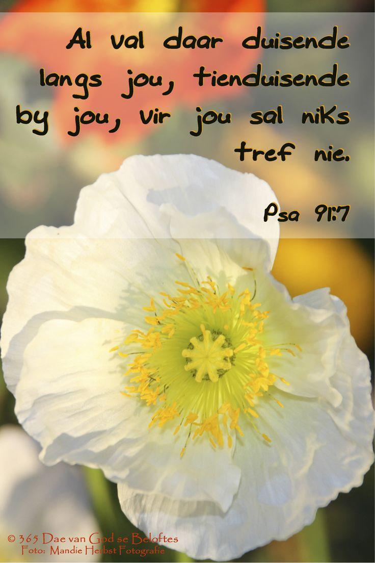 Bybelverse Psa 91:7 Al val daar duisende langs jou, tienduisende by jou, vir jou sal niks tref nie.