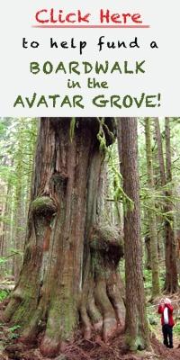 Avatar Grove Boardwalk