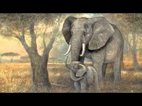 Muzikale tegenstellingen: laag = de olifant uit het Carnaval der Dieren (Saint Saens)
