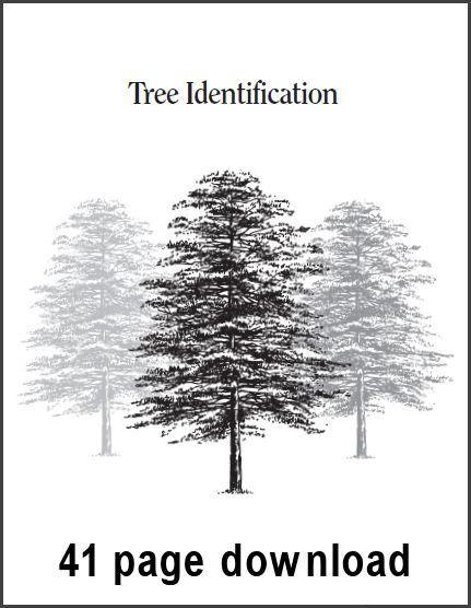 The 25+ best Tree identification ideas on Pinterest