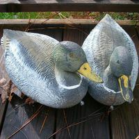 Even new decoys eventually lose their luster, so most waterfowl-hunting sportsmen should learn how to paint duck decoys. While you need not be a professional artist to create a reasonable facsimile of a live duck, you must understand the basic process and materials necessary for the job. After preparing the decoys properly and painting the major...