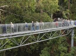 Travel With MWT The Wolf: Attractions From The World  Illawarra Fly treetop ...