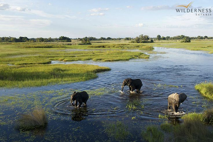 Jacana Camp – Wildlife concentrations in this area of the Delta depend on water flow and volume, changing from season to season. #Africa #Safari #Botswana