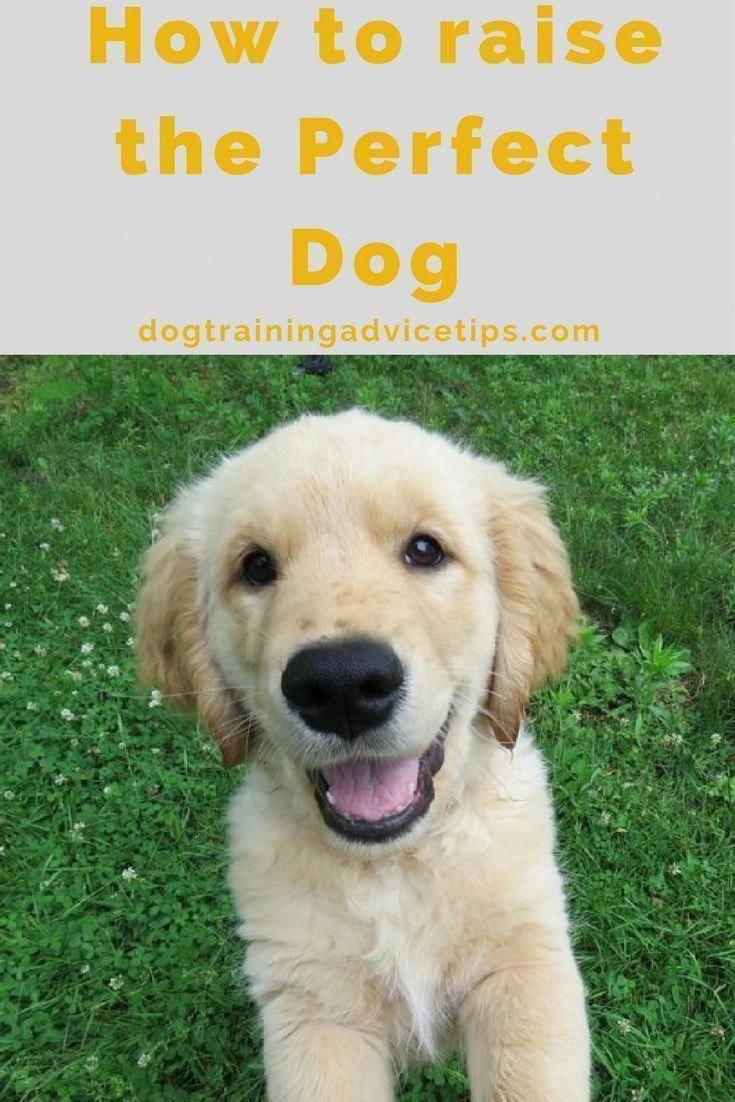 House Breaking Dogs Housebreakingdogs Dog Training Advice