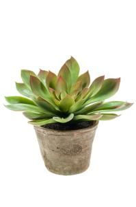 artificial potted plant echerveria mira bush 30cm in 11cm aged terracotta pot