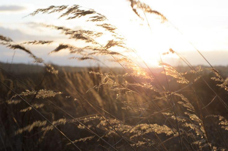 Sunset over grass