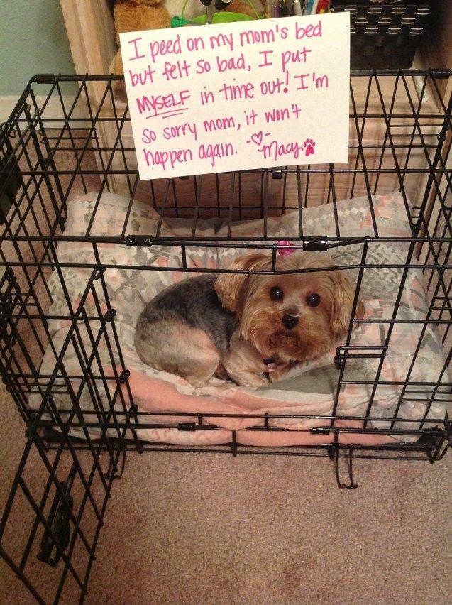 Dog Shaming self punishing doggie yorkie love