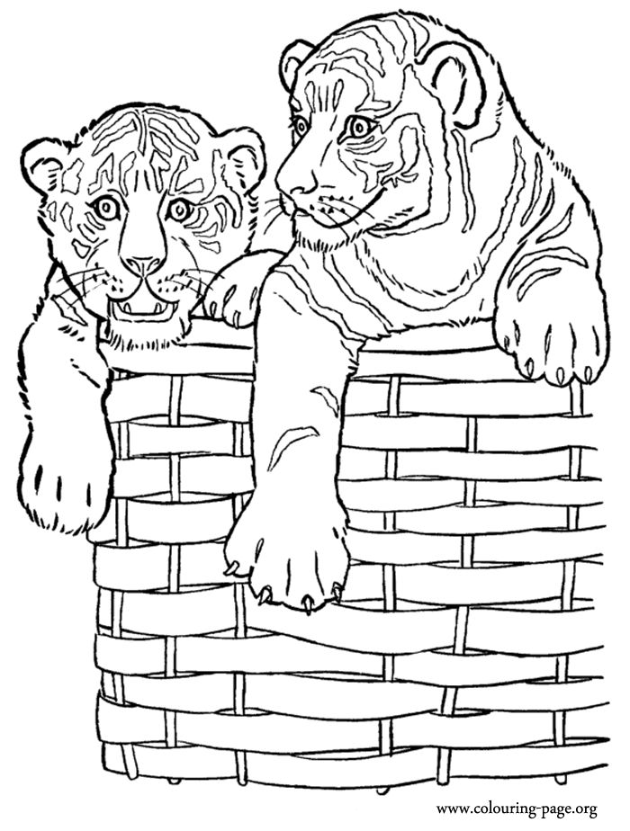 109 best dog cat coloring images on pinterest coloring for Free tiger coloring pages