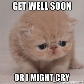 The 25+ best Get well soon cat - 13.4KB