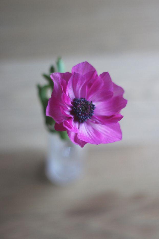 1000 id es sur le th me fleurs de mariage en novembre sur pinterest mariage de novembre. Black Bedroom Furniture Sets. Home Design Ideas
