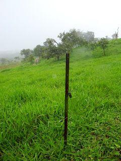 Fazenda Veredas 28/01/2013   As cercas preferidas pelos pecuaristas do passado eram as de arame farpado que depois cederam espaço para a...