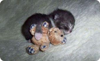 Gatos abrazados a peluches