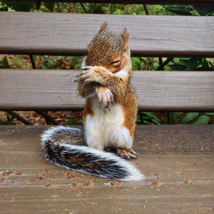 Shy little squirrel. ♥♥