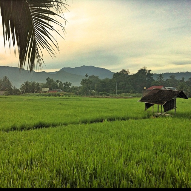 100 % Indonesia !! <3 pict from @DeniSanjaya