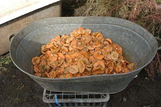 НАТУРАЛЬНОЕ ХОЗЯЙСТВО: Рыжики - деликатесные грибы!