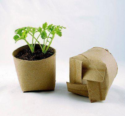 Repurpose toilet paper rolls to start seeds in
