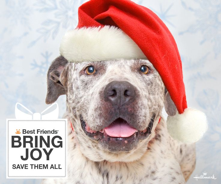 Bring joy to your world this holiday season by adding a new family member! Dog and cat adoptions are just $25 now through December 31 at Best Friends and participating network partners thanks to our friends at Hallmark.   Get all the details and meet our eligible adoptables HERE!