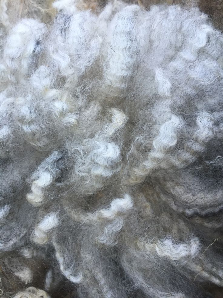 Raw Romney Wool. This photo shows the amazing