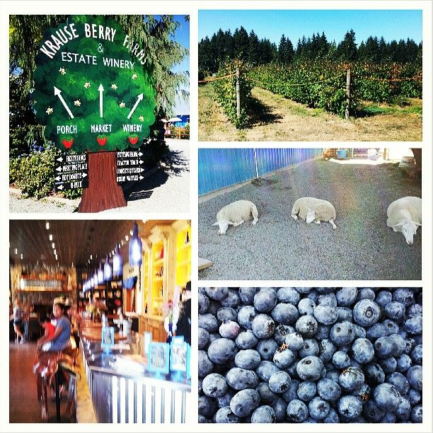 At Krause Berry Farms & Estate Winery you can pick berries. eat delicious sweets and enjoy some wine!