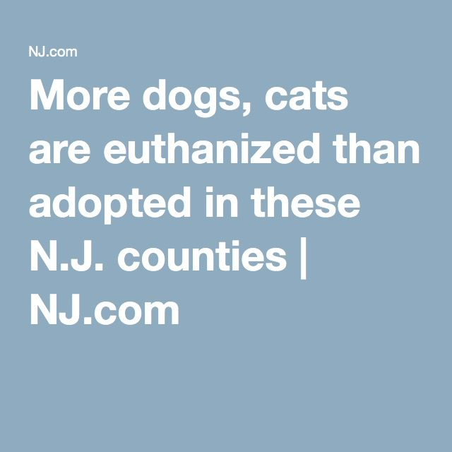 SHAME ON NEW JERSEYMore dogs, cats are euthanized than adopted in these N.J. counties | NJ.com