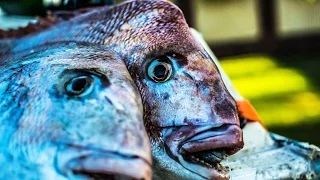 Snapper Fishing Tackle -Reedy's rigz - YouTube