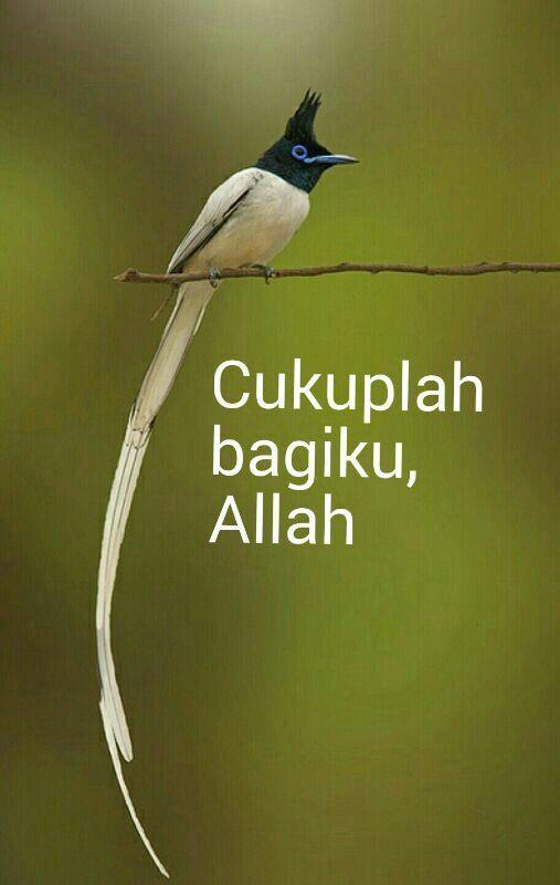 Hikmah....cukuplah bagiku Allah