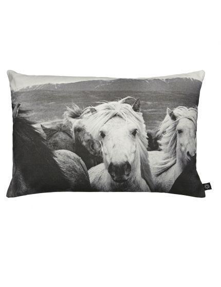 Icelandic Horses, 60x45 cm