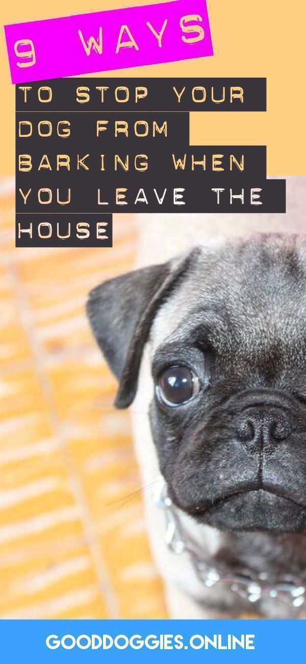 If Your Puppy Starts Barking As Soon As You Leave The House Check