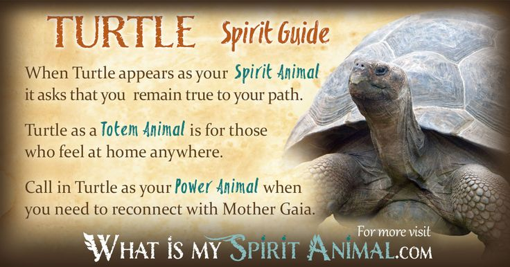In-depth Turtle Symbolism & Turtle Meanings! Turtle as a Spirit, Totem…