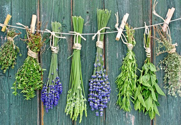 Keep the goodness of the garden going longer by using techniques like drying and freezing to preserve your herbal harvest.