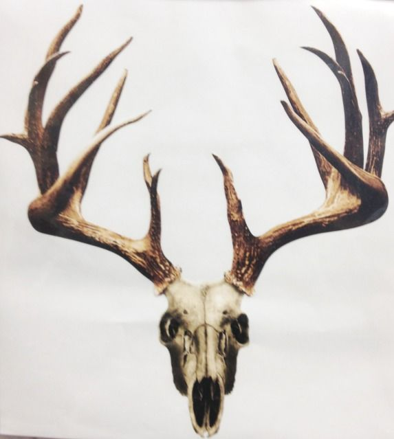 Best 25+ Moose skull ideas on Pinterest | Animal skulls ...