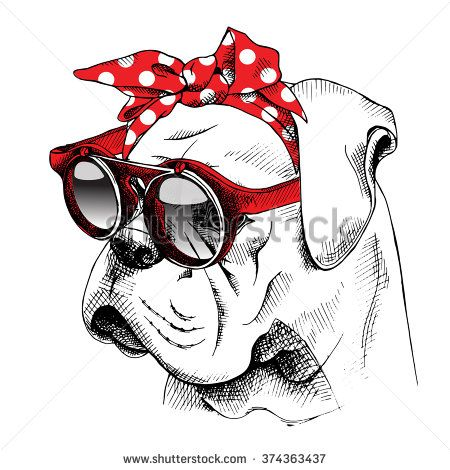 The image of the portrait Bulldog dog in the headband and with the glasses. Vector illustration.