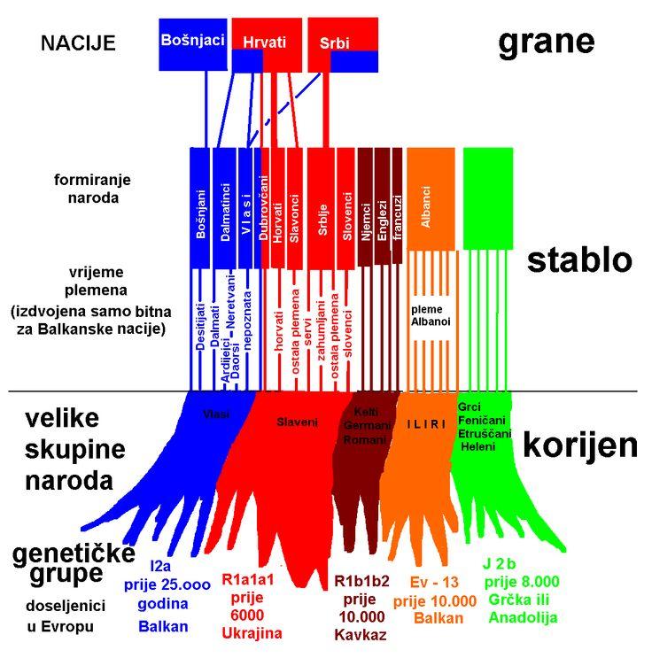 Genetsko porijeklo podrijetlo hrvata srba i bosnjaka geneticke grupe