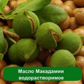 Купить масло макадамии водорастворимое оптом для применения в косметике – кремах, массажных смесях, средствах для загара и в мыловарении