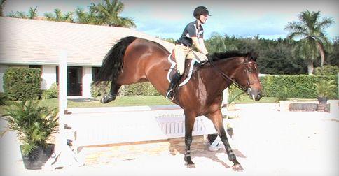 George Morris Schooling Series: An Equitation School with Emma Kurtz http://www.equestriancoach.com/content/george-morris-schooling-series-equitation-school-emma-kurtz