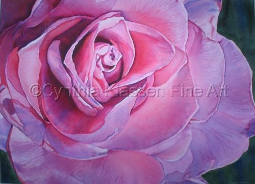 Annie's Rose is a watercolor painting by Cynthia Klassen. Prints available through CynthiaKlassen.com