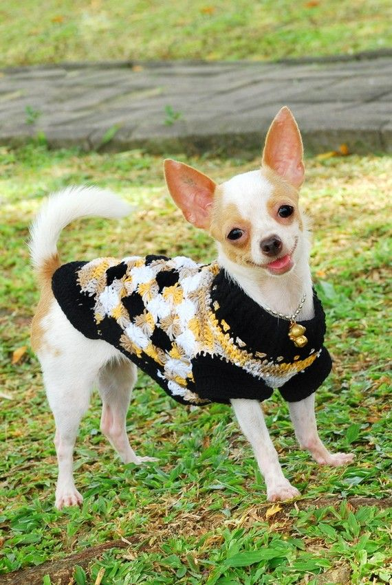 I don't want the chihuahua. Just the sweater for puppy!    Handmade Dog Puppy Sweater Jacket Clothes Hand Crochet by myknitt, $25.00
