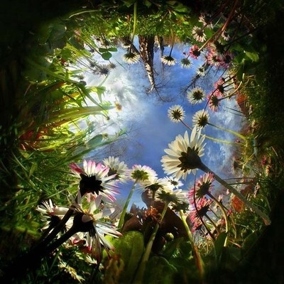 down the rabbit hole... As I recall Alice is lost and worried that she can't find her way home. She falls asleep under a tree in the forest, then a rabbit wakes her. She follows him home, through the woods, then goes tumbling down the rabbit hole, a long journey deep into a place of wonder...