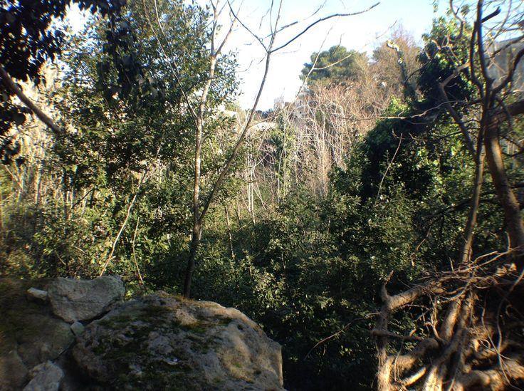 #salentowebtv #weareinsalento A Lecce l'oasi del WWF #Salento è il Parco delle cave di via San Cesario, ex cava estrattiva di pietra leccese, oggi una vera foresta urbana della città. Guarda il video http://www.salentoweb.tv/video/9257/scoperta-foresta-urbana-lecce