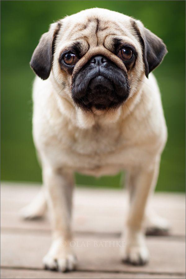 0004-hunde-fotograf-kiel-fotografieren