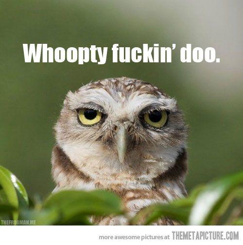 Unimpressed Owl - The Meta Picture