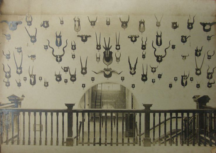 """KZN Museum, """"Horns display on second floor"""" circa 1950, Pietermaritzburg. Due to the extension of the second floor, this view is no longer possible."""