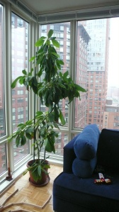 Grow a tree.  An avocado tree.