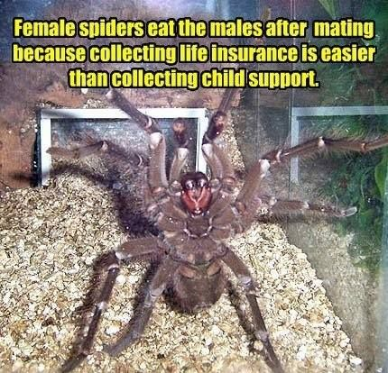 Funny spider meme picture - http://jokideo.com/funny-spider-meme-picture/