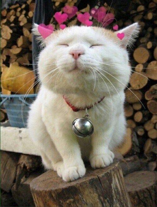 snap cat i love cats pinterest cat kitty and animal