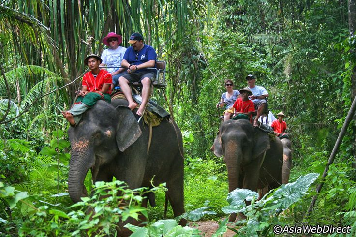 White Water Rafting & Elephant Trekking in Phang Nga - Day Trip - Departure from Phuket, Khao Lak and Krabi