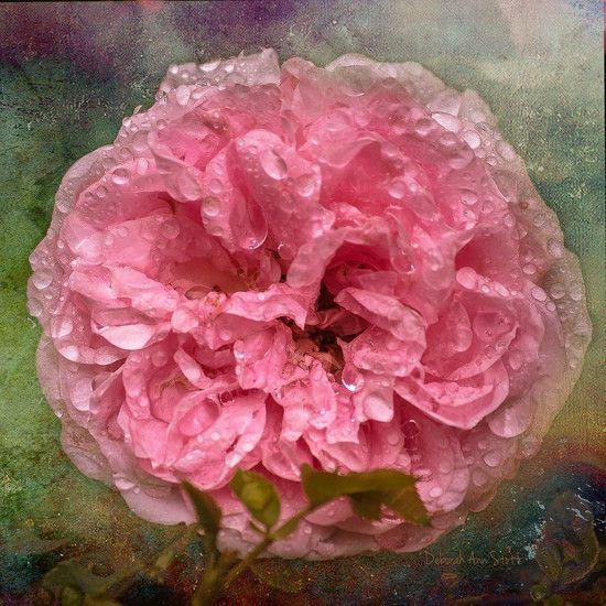 Drenched Artistic textures applied (C) Deborah Ann Stott