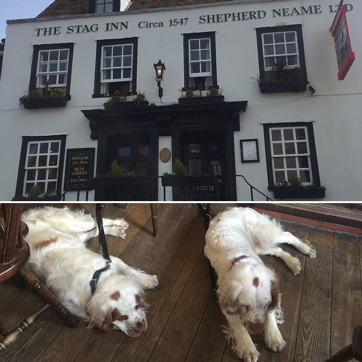 Albert's  Boozer guide: Been to the Stag Inn in Hastings woofer friendly nice food friendly service wooden comfy floorboards and nice fire  4 out of 5 from Albert  will def go again #hastings#clumberspaniel #spanielsofinstagram #albertsboozerguide#dogsofinstagram #puppiesofinstagram #cute#dogfriendlyrestaurant by albert_ethel_